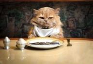 Cat for restaurant ad