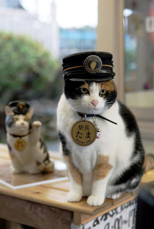 Station-master-tama-2