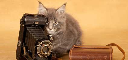 Camera-cat-hero